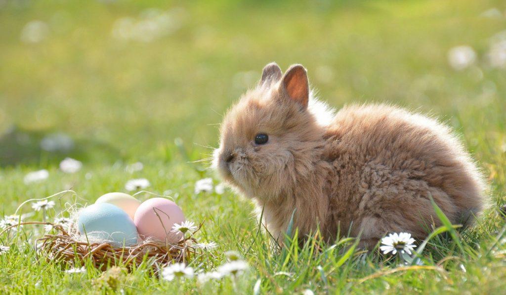 As várias versões da origem da lenda do coelho da Páscoa